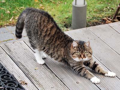 image for Pets Get Arthritis Too