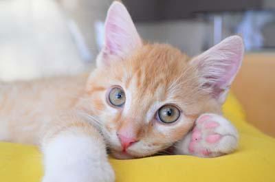 image for Litter training your kitten