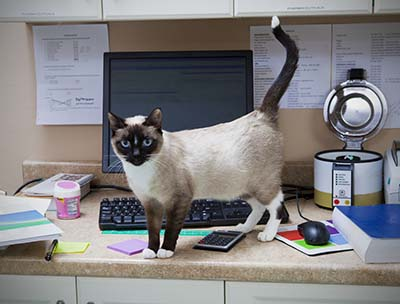 image for 7 Jobs That Were Made for Cats