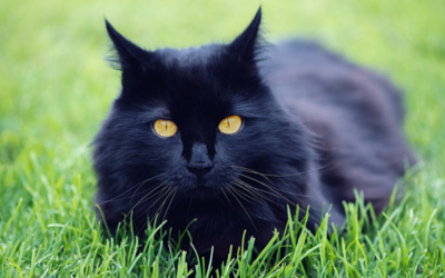 image for Debunked! 6 Common Myths about Cats