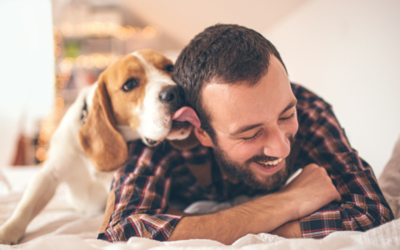 image for Simple New Year's Resolutions to Make for Your Pet