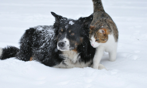 image for 12 Winter Safety Tips for Pets