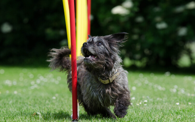 image for January is Dog Training Month!
